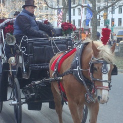 Hose-drawn carriages at Central Park